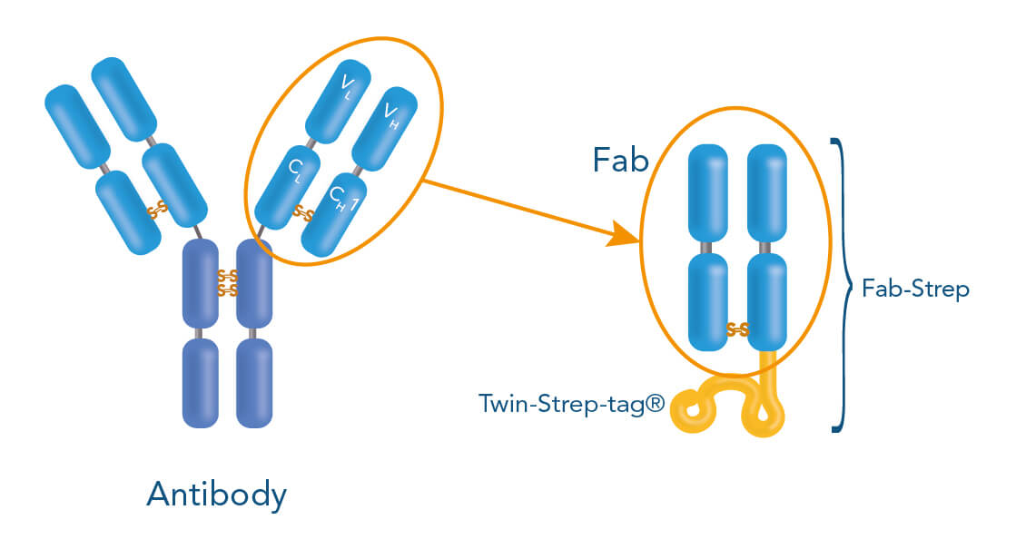 Fab-TACS cell isolation based on Fab fragments
