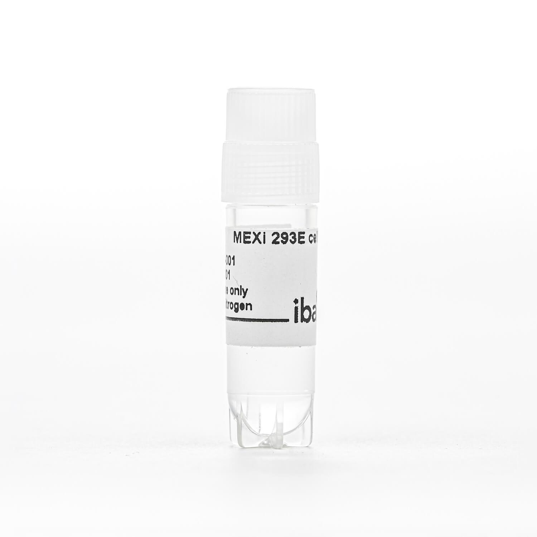 MEXi-293E cells