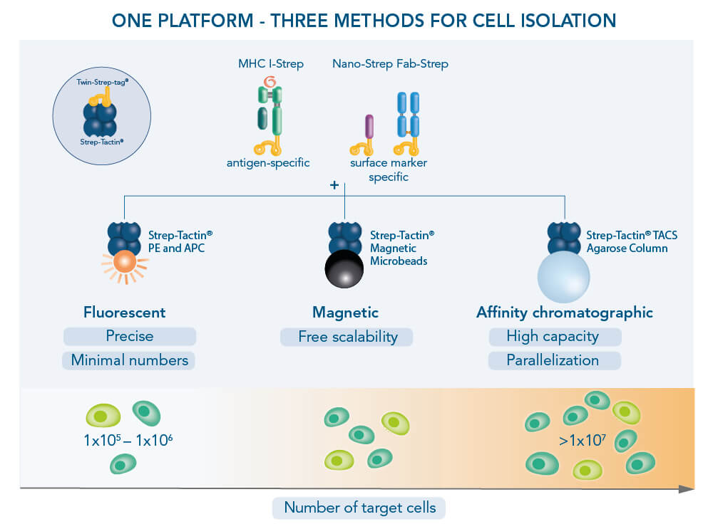 Cell isolation methods
