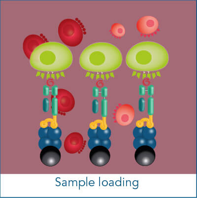 Antigen-specific cell isolation sample loading step