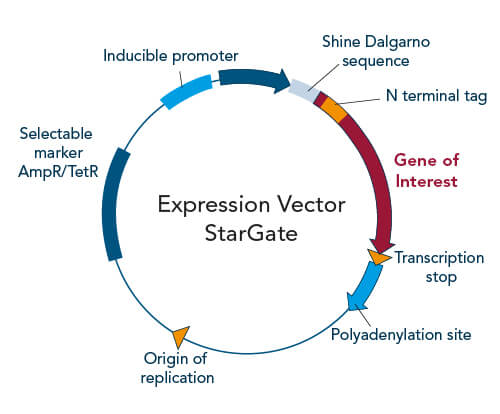 StarGate cloning expression vector elements