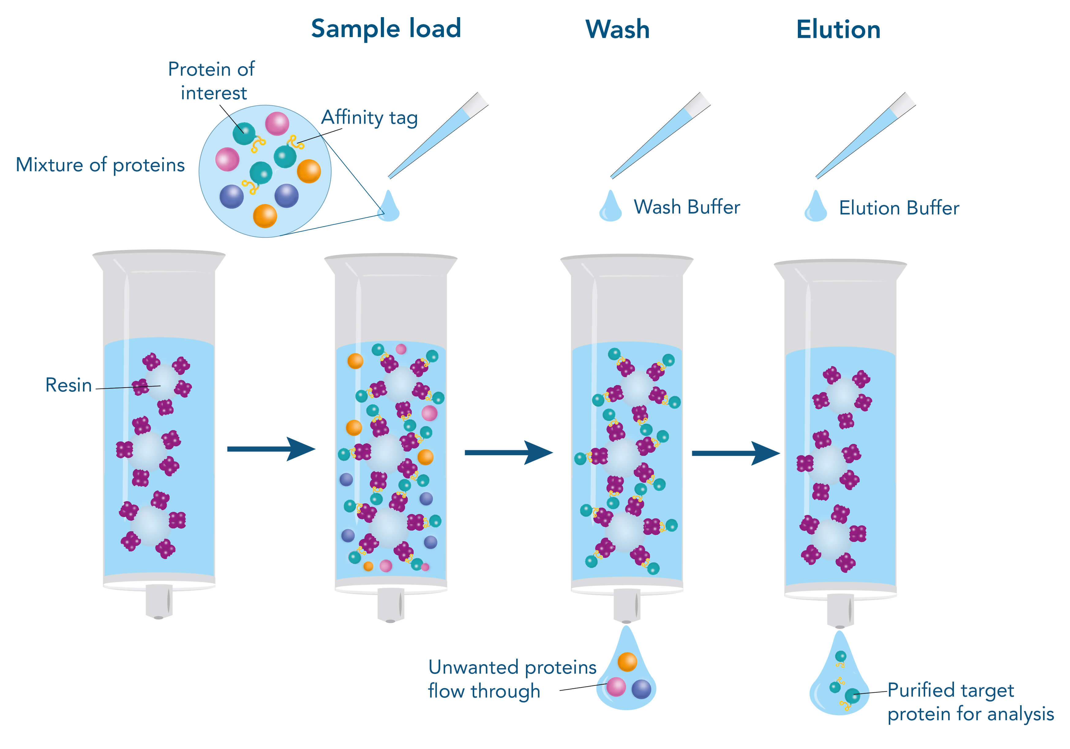 Affinity-based protein purification steps