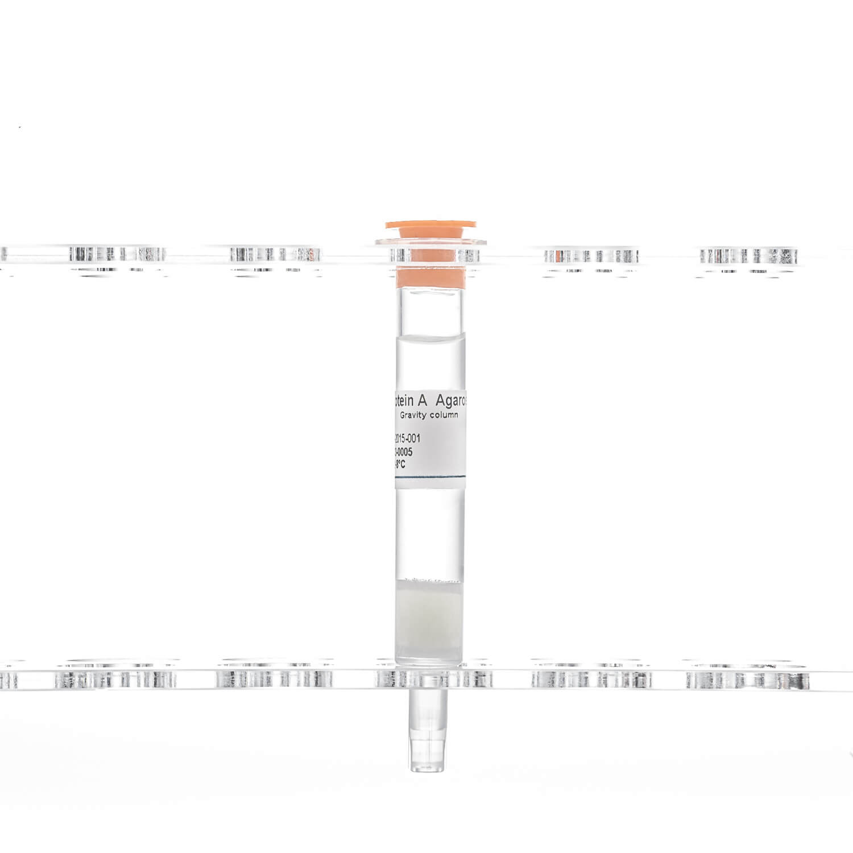 Protein A Agarose column