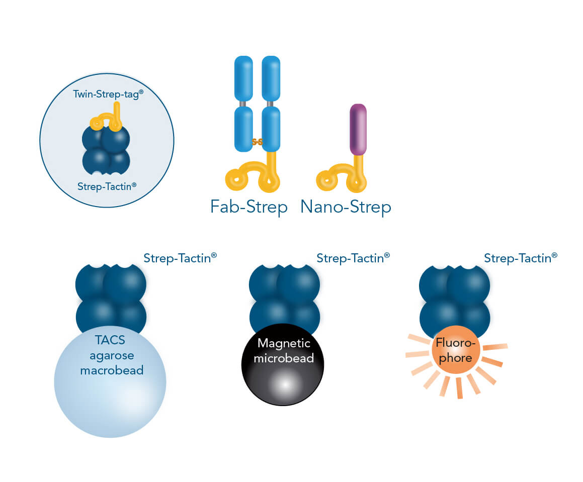 Fab-TACS®/Nano-TACS® cell isolation methods