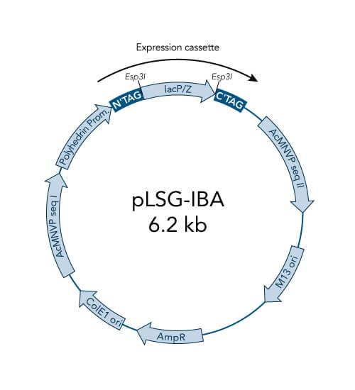 pLSG-IBA3 vector