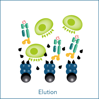 Elution of reagents for label-free cell isolation