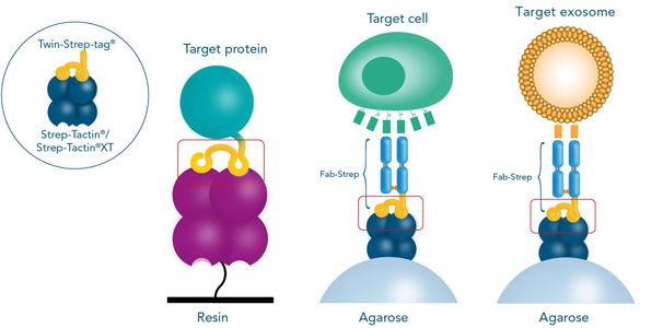 possible tag-ligand combinations