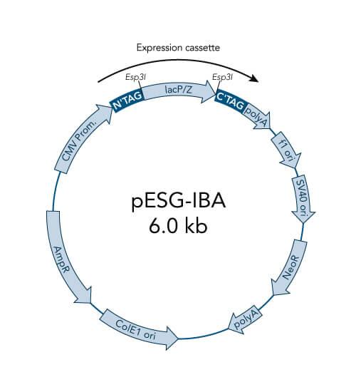 pESG-IBA103 vector